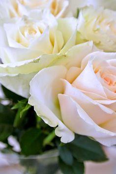 #roses  www.stellarstories.fi @stellarstoriesblog #stellarstoriesblog