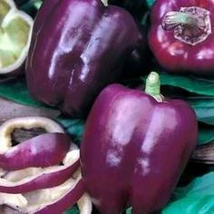 ~Purple Beauty Pepper~