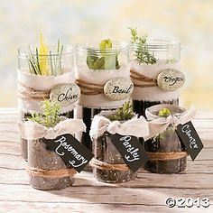 Make your own herb garden for home