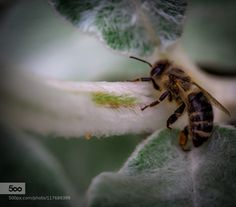with his last strength... by edithnero. Please Like http://fb.me/go4photos and Follow @go4fotos Thank You. :-)