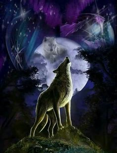 Looks like the white wolf is in the moon, the color's are beautiful Wolf Photos, Wolf Pictures, Wolf Wallpaper, Animal Wallpaper, Fantasy Wolf, Fantasy Art, Spiritual Animal, Wolf Artwork, Wolf Spirit Animal