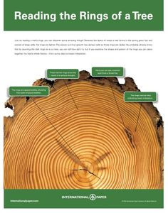 International Paper - Life of the Forest.great posters for use in botany. Outdoor Education, Outdoor Learning, Nature Activities, Science Activities, Science Projects, School Projects, Outdoor Activities, Earth Science, Educational Activities