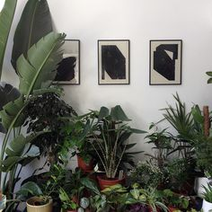 Beautiful combination of art and plants at urban plant shop Stek in Rotterdam.