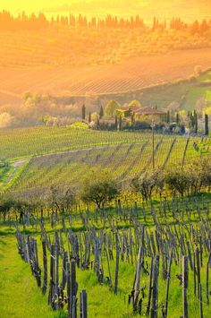 Amazing Chianti landscape in Tuscany, Italy - Simply Magical