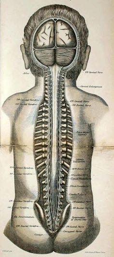 Vintage Medical Anatomy Illustration Science Anatomy Human