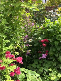 Home And Garden, Plants, Planters, Plant, Planting