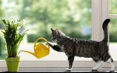 Хотите, чтобы ваши комнатные растения цвели пышно и часто? Прислушайтесь к советам опытных флористов. Эти простые рекомендации помогут вам вырастить настоящий цветущий сад на подоконнике. Все секреты здесь! Секрет роскошного комнатного цветника прост: растения нужно хорошо подкармливать, иначе не дождаться ни пышной листвы, ни хорошего цветения. Но как правильно составить меню для зеленых питомцев, учитывая …