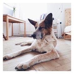 Ani go obejść ani przeskoczyć...  #dog #pies #kundelek #warsawdog #chillout
