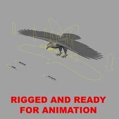 Bald Eagle 'Haliaeetus Leucocephalus' Rig Show Maya.  This model is available on Turbosquid: http://www.turbosquid.com/3d-models/maya-haliaeetus-leucocephalus-bald-eagle/763489?referral=triduza