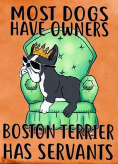 Dog Cartoons, Cartoon Dog, Cute Funny Animals, Funny Dogs, Dog Love, Puppy Love, Boston Terrier Art, Family Dogs, Little Dogs