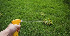 Всегда вырывала сорняки руками, пока соседка по даче не посоветовала это средство. Легко и надолго! Очень довольна!