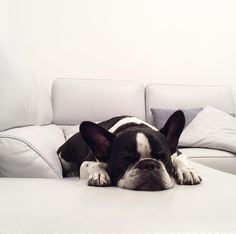 Sono piallato....lavoro troppo. Non ho più l'età . . . #frenchbulldog #bully #divano #livingroom #grey #shadow #blackandwhite #french #bully #dog #pug #carlino #brabantialife #griffoncino #bruxelles #pillows #texture #tonesurtone #tone #abstract #differencemakesus