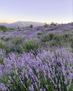 Lavender Aesthetic, Nature Aesthetic, Flower Aesthetic, Purple Aesthetic, Aesthetic Fashion, Images Esthétiques, Jolie Photo, Pretty Pictures, Aesthetic Pictures