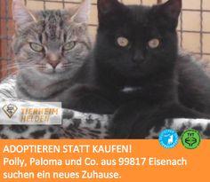 """Polly, Paloma und einige andere stammen aus einer Gartenanlage und warten jetzt im Tierheim Eisenach.  http://www.tierheimhelden.de/katze/tierheim-eisenach/rasse/polly_paloma_u_co/1812-1/  Sie sind im Vergleich zu Wohnungskatzen natürlich um einiges scheuer, aber dennoch stubentreu. Ein Haus mit Garten oder sogar eine Scheue wäre toll im neuen Zuhause. Eine Wohnung ist für die """"Gartenanlagen-Katzen"""" ungeeignet, da sie so eine Haltungsform nicht kennen."""