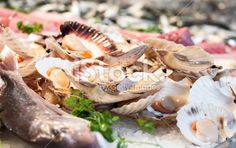 Seafood: fresh Scallops and fishes at Market - Stock Image Royalty Free Stock Photo