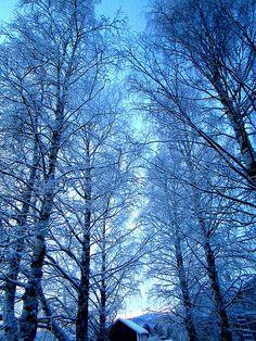 winter wonderland | by satu.ylavaara