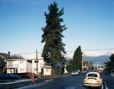 Jeff Wall The Pine on the Corner 1990 Collection of the Vancouver Art Gallery Landscape Photography, Art Photography, Jeff Wall, Vancouver Art Gallery, Photograph Video, Hometown Heroes, Positive Images, Museum Exhibition, Canadian Artists