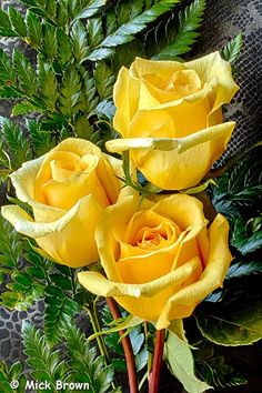 A yellow rose is my favorite; next year I will plant a yellow rose bush in the garden: