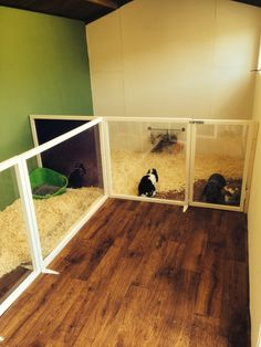 Home Sweet Home - Rabbit Shed Hutch Conversion. Love my rabbits & hate hutches x