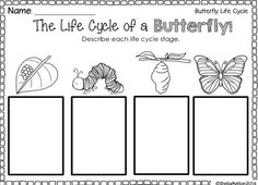 Printables Butterfly Life Cycle Worksheet check out our worksheets to help students learn about the your will be crawling with excitement when you introduce these butterfly life cycle