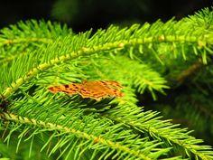 Fotó Plant Leaves, Herbs, Plants, Herb, Plant, Spice, Planting, Planets