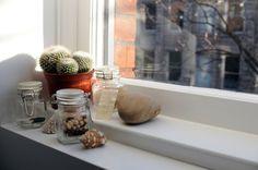 cactus apartment, indoor plants, apartment plants