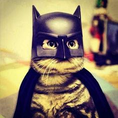 The Dark Feline - The Cutest Cats Dressed as Superheroes