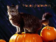 Black Cat on Pumpkin Happy Halloween 2014 Wallpaper, Images, Pictures on October 31 Samhain, Halloween Cat, Happy Halloween, Halloween 2014, Halloween Season, Cat Costumes, Halloween Costumes, Yellow Green Eyes, Fall Cats