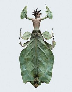 Insectes, Photo Composites of Woman-Insect Creatures