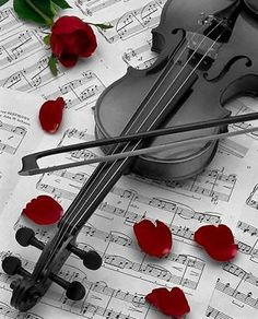 Black Violin and Red Rose Petals Color Splash, Color Pop, Album Design, Black Violin, Black Piano, Splash Photography, Photography Music, Color Photography, Violin Music