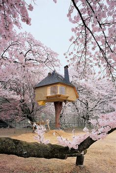 Amazing Tree House in Yamanashi (Japan)