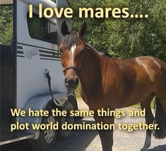 I Love Mares Equestrian Memes, Funny Horses, World Domination, Humor, My Love, Youtube, Animals, Horse Stuff, Instagram