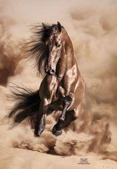 Este cavalo é selvagem Este cavalo é selvagem porquê paresse com este vento todo...