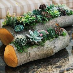 Home Decor 20 DIY Cactus und Succulent Garden Decor Ideas cactus decor garden gardendecorationideas ideas succulent art garden indoor plants Succulent Planter Diy, Succulent Gardening, Container Gardening, Log Planter, Vegetable Gardening, Succulent Ideas, Organic Gardening, Succulent Tree, Succulent Landscaping