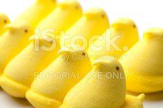 Peeps Yellow Marshmallow Chicks royalty-free stock photo