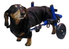60 Best Animal Disabilities images in 2018 | Animals, Pets, Dogs