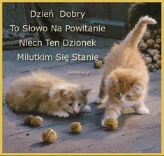 Stowa, Languages, Baby Kitty, Good Morning, Idioms