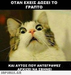 You know, everyday we collect awesome and funny pictures for you and your laughing.As well as, Today we collect some Monday memes cat that are so funny and humor.Keep enjoy and also share with your friends. Funny Cat Memes, Funny Cats, Funny Animals, Cute Animals, Silly Jokes, Funny Quotes, Cat Birthday Memes, Cat Captions, Humor Venezolano
