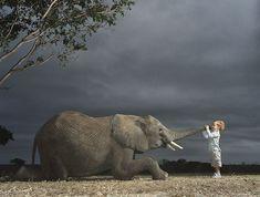 Работы призера международных конкурсов, фотографа дикой природы Tim Flach (66 фото - 7.53Mb) » Фото, рисунки