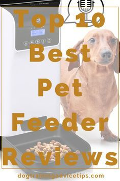 This Article Lists O This Article Lists Out The Top 10 Best Pet Feeder Reviews On The Market We Also Guide You To Choosin Pet Feeder Pets Online Dog Training