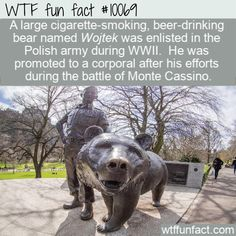 WTF fun fao'r A large cigarette-smoking, beer-dn'nking bear named Wojtek was enlisted in the Polish army during WWII. He was promoted to a corporal after his efforts during the battle of Monte Cassino. Funny Weird Facts, Wtf Fun Facts, Random Facts, Fun Funny, Fun Facts About Animals, Animal Facts, Cute Animal Quotes, Cute Animals, Funny Animals
