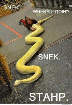 Snek is love. Snek is life. Cute Funny Animals, Funny Animal Pictures, Funny Cute, Hilarious, Humorous Animals, Fail Pictures, Funniest Pictures, Animal Pics, Zoo Animals
