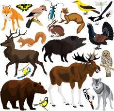 set of vector forest animals vector art illustration