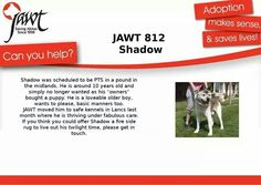 Shadow is a grand old gent, that would love nothing more than a fire to snuggle in front of. If you can help, please complete our online form.Uk/adopt-an-akita Japanese Akita, Share My Life, Can You Help, Dog Houses, Trust, Puppies, Online Form, Comfy Bed
