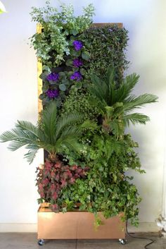 plants on walls vertical garden blog page