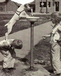 """Cute old photo of a very Smart Dog! Reminds me of the movie """"My Dog Skip"""""""