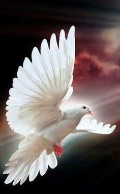 18 ideas tattoo bird dove wings for 2019 Pretty Birds, Love Birds, Beautiful Birds, Animals Beautiful, Animals And Pets, Cute Animals, White Doves, Pigeon, Exotic Birds