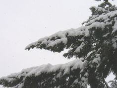 Snow fall in Vancouver