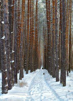 Bosque nevado en Kyiv, Ucrania