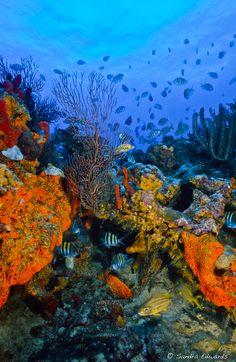 A 50 foot deep  Boynton Beach Reef off of Palm Beach County.